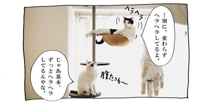 【猫写真4コママンガ】「それどこ情報」パンチョとガバチョ #72