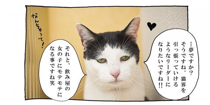 【猫写真4コママンガ】「ロングインタビュー」パンチョとガバチョ #76