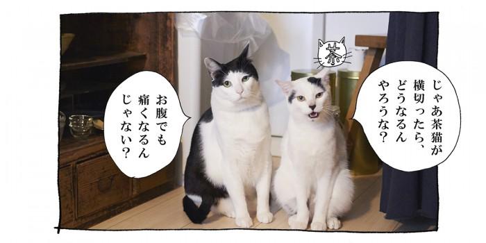 【猫写真4コママンガ】「腸に効きます」パンチョとガバチョ #79
