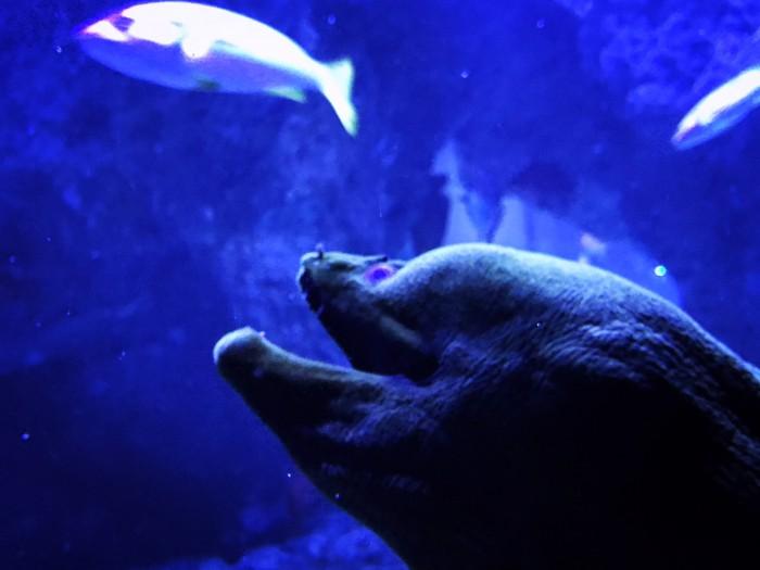 実は簡単…!? 水族館で超かわいい写真が撮れちゃうコツ・前編 #30