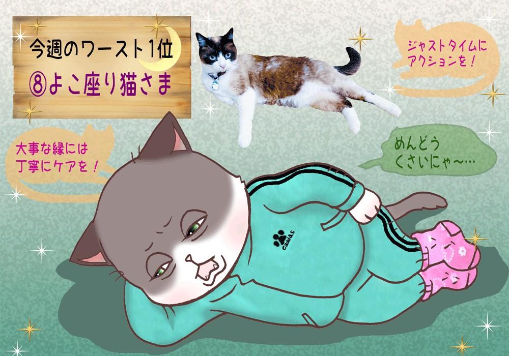【猫さま占い】噂に注意の猫さまは? 12月9日~12月15日運勢ランキング