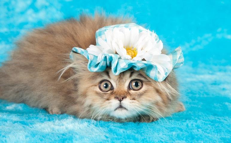 あなたの「猫かぶり度」が判明!2月22日、猫の日にチェックテストをお届け