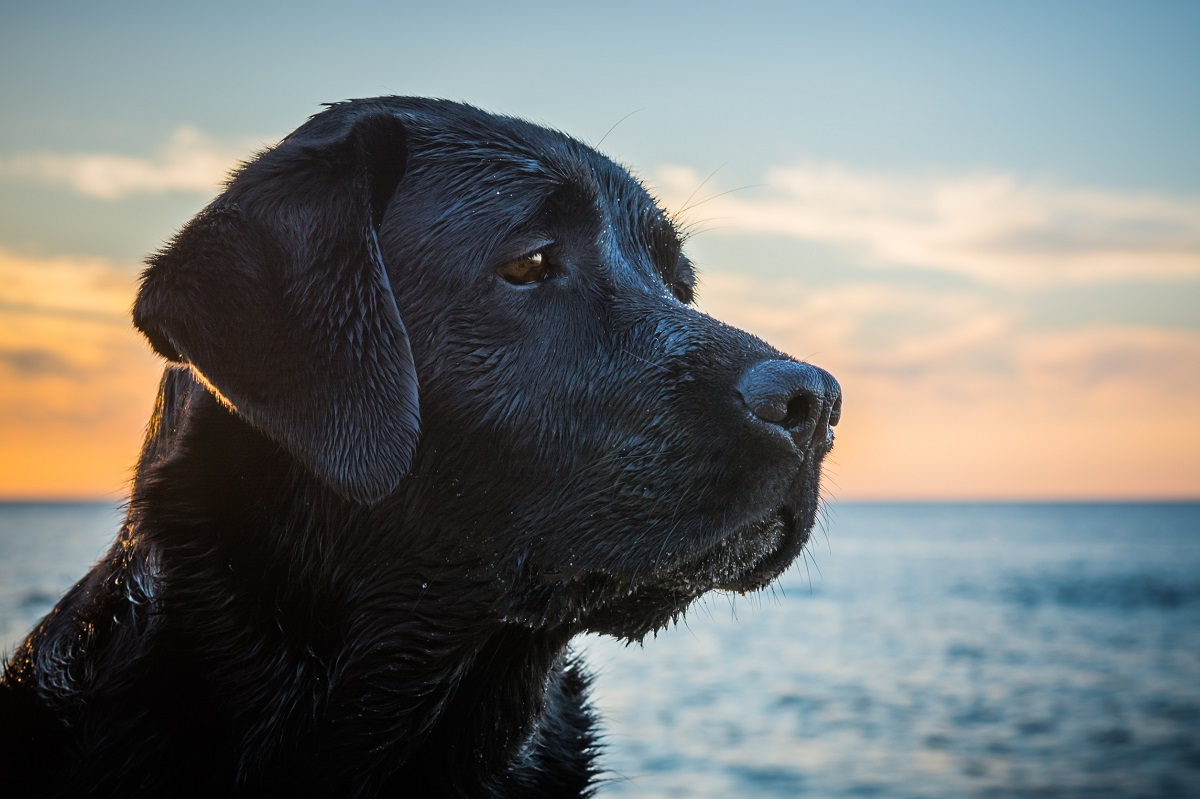 元保護犬が幸せに暮らせるニュージーランド、引き取るときの厳しい条件とは