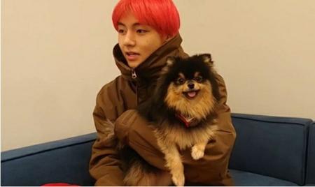 韓国ボーイズグループ「防弾少年団」(BTS)のVの愛犬ヨンタンと、俳優パク・ソジュンの愛犬シムバが出会った。(写真提供:OSEN)